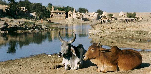 Rajasthan Compleet (15 dagen)